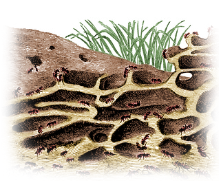 How To Destroy An Ant Hill