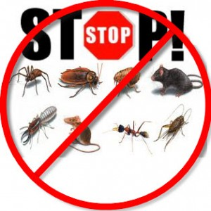stop infestation