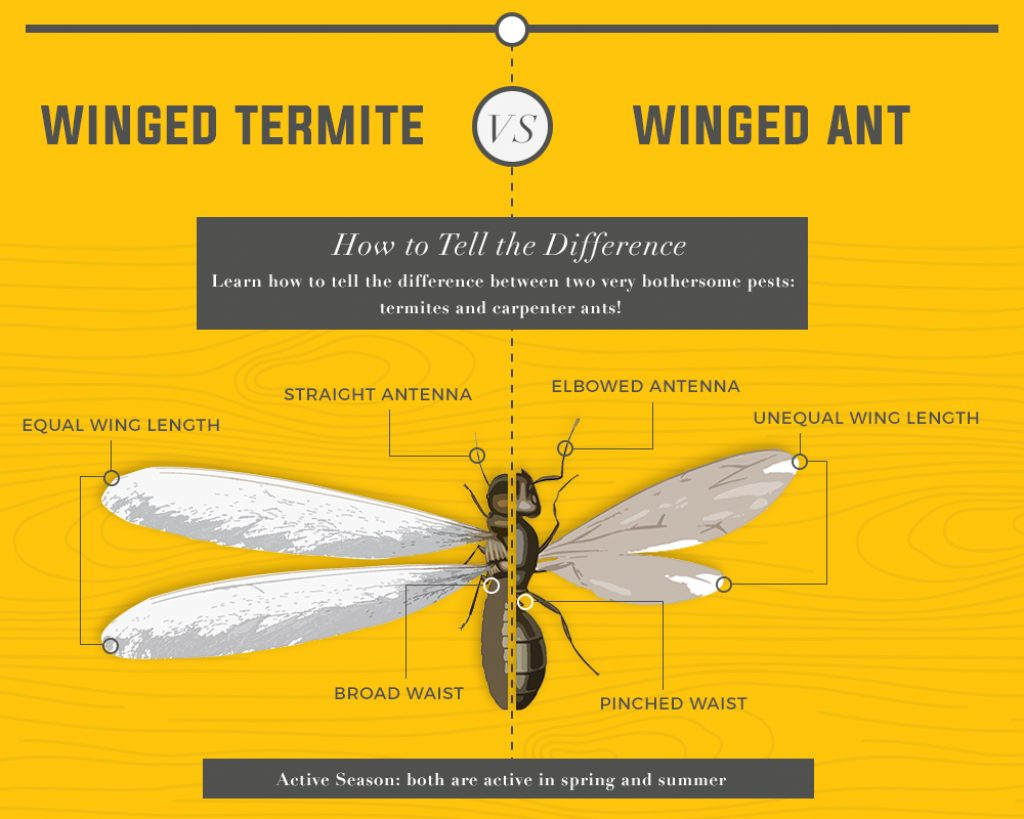 How To Kill Termites And Get Rid Of Them Forever In 2018 - How-to-remove-termites-from-furniture