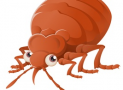 How To Detect, Resolve And Prevent Problems With A Bed Bug Infestation