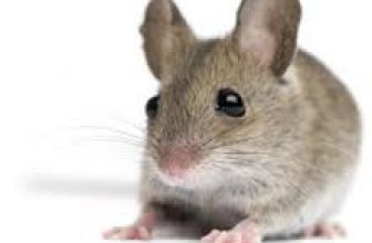 How To Get Rid Of Mice In Your House – Best Way To Kill These Rodents In 2017