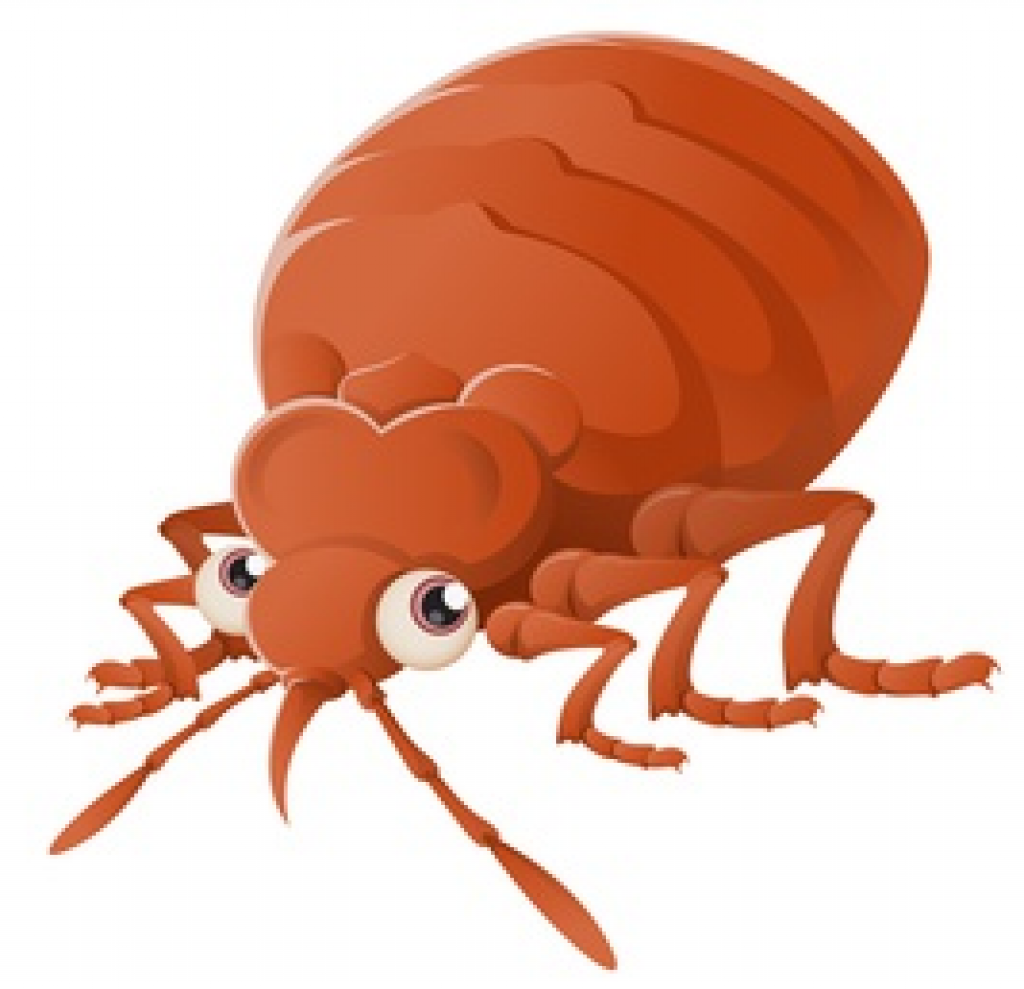 How To Detect, Resolve And Prevent Problems With A Bed Bug ...